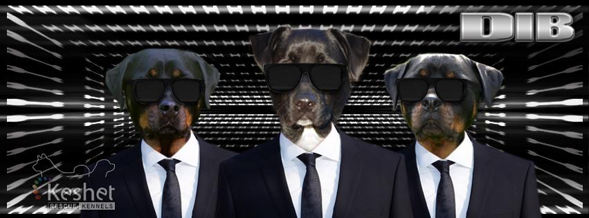 Dogs-in-Black-Keshet