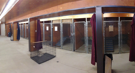 Keshet Kennels - Boarding / Daycare -Dog Kennels