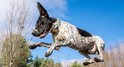 Dog Boarding Kennels Regulations Canada