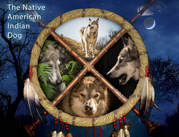 At Rest (2).NATIVE AMERICAN INDIAN DOG