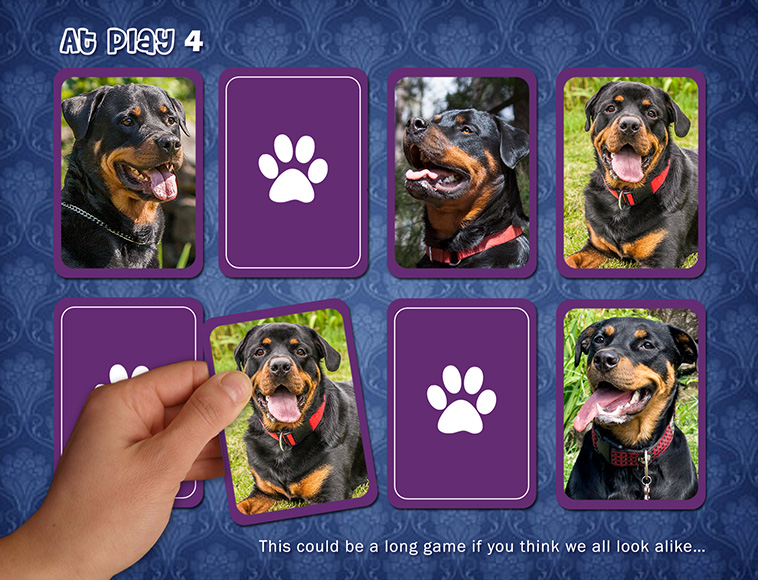 At play (4) ROTTWEILERS